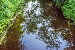 一棵树的反射在Haagse猜错的, Th的森林一个水池 免版税库存图片