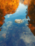 一棵树的反射的五颜六色的抽象看法在水表面的波纹的 图库摄影
