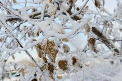 一棵树的叶子在雪的 免版税图库摄影
