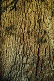 一棵树的吠声在日落的 库存照片