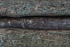 一棵树的吠声的压印的纹理与青苔的对此 木树纹理样式墙纸 ?????? 免版税库存图片