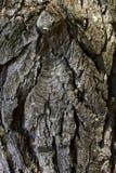 一棵树的吠声的细节与青苔的 库存图片
