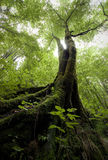 一棵树的垂直的照片与绿色青苔的在一个绿色森林里在夏天 库存图片