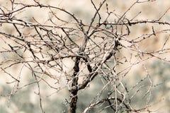 一棵树的干燥分支本质上 免版税库存图片
