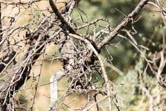 一棵树的干燥分支本质上 免版税图库摄影