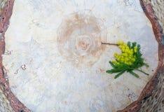 一棵树的木纹理与黄色花的 库存图片