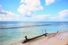 一棵树的树干在海滩的岸的卡塔利娜海岛, 图库摄影