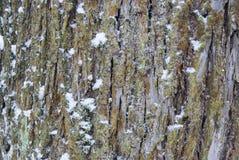 一棵树的树干在雪的森林 免版税库存图片