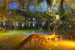 一棵树的树干在Hoan Kiem湖,河内,越南的 免版税库存照片