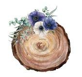 一棵树的水彩横断面与蓝色和白色银莲花属花束的 手画花和eucaliptus叶子 库存照片