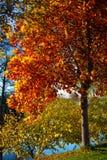 一棵树的浪漫秋天场面由河的 免版税库存照片