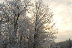 一棵树的照片与雪的在分支和日出 库存照片