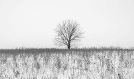 一棵树的照片没有叶子的在雪报道的领域在冬天 库存照片