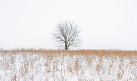 一棵树的照片没有叶子的在雪报道的领域在冬天 免版税库存照片