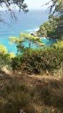 一棵树的看法在亚得里亚海的Tremiti海岛的意大利 免版税库存图片