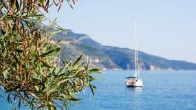 一棵树的绿色叶子以海、山和蓝天为背景的 免版税库存图片