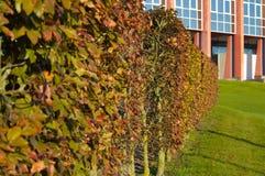一棵树的绿色灌木在大厦背景的庭院里 免版税图库摄影