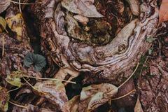 一棵树的美好的纹理与秋叶的 图库摄影