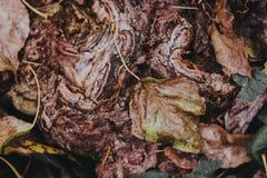 一棵树的美好的纹理与秋叶的 免版税库存图片