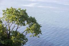 一棵树的鸟瞰图在美丽的海滩的在卡泰里尼,希腊 库存照片