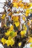 一棵树的黄色叶子在罗卡拉索,阿布鲁佐大街的  库存图片