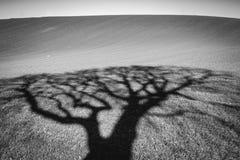 一棵树的阴影在冬天下午的 库存照片