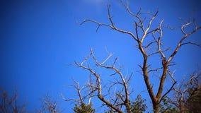 一棵树的死的干燥分支在一个领域的反对 影视素材