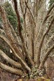 一棵树许多道路 图库摄影
