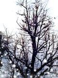 一棵树 免版税库存照片