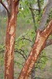 一棵树 图库摄影