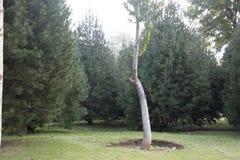 一棵树 免版税图库摄影