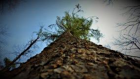 一棵树 库存图片