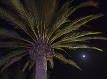 一棵棕榈树在与月亮的晚上在背景中 免版税图库摄影