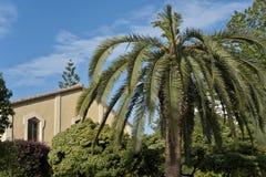 一棵棕榈树在庭院,巴伦西亚里。 库存照片