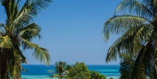 一棵棕榈树或椰子树与美丽的蓝色海当距离背景 库存图片
