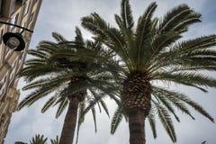 一棵棕榈树的上面在市马拉加,西班牙,欧洲 免版税库存图片