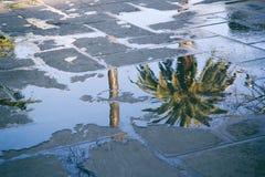 一棵棕榈树的反射在水坑的 库存图片