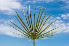 一棵棕榈树的叶子与蓝天的 免版税库存照片