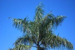 一棵棕榈树的照片有明亮的背景 免版税库存照片