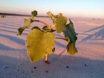 一棵植物在沙漠 免版税库存照片