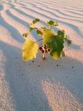 一棵植物在沙漠 免版税库存图片