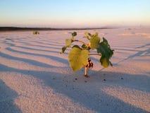一棵植物在沙漠 库存图片