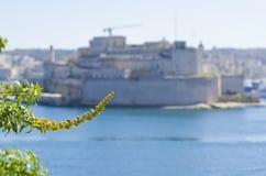 一棵植物有瓦莱塔港口的背景 图库摄影