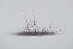 一棵植物的冻叶子在冬天 免版税图库摄影