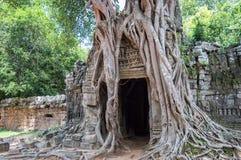 一棵榕树的根在Ta Prohm寺庙在吴哥, Siem Rep柬埔寨的 库存照片