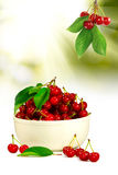 一棵樱桃的图象在碗特写镜头的 库存照片