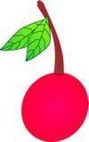 一棵樱桃 库存图片