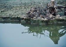 一棵死的树分开与它的在水照片的反射 免版税库存照片