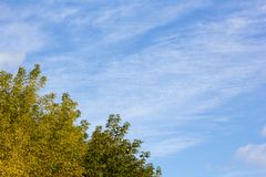 一棵母狗树的看法与黄色的在秋天离开反对清楚的蓝天在一个晴天 图库摄影