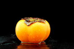 一棵湿亚洲柿树 免版税库存照片
